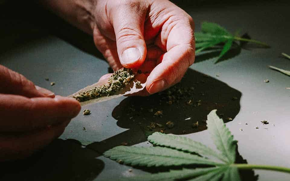 5 essential tips for new cannabis growers